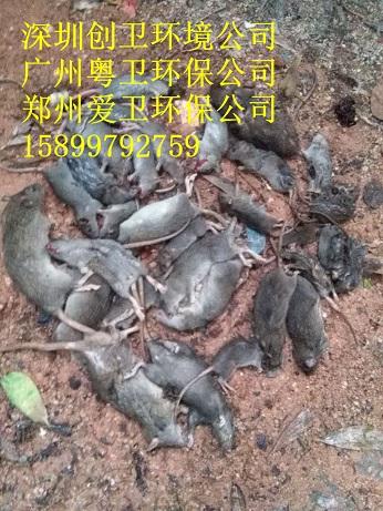 深圳灭四害杀虫公司